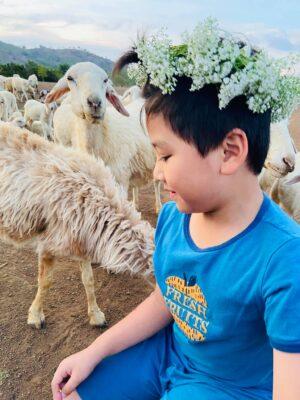 Nên đến Đồi Cừu Suối Nghệ vào những ngày nắng