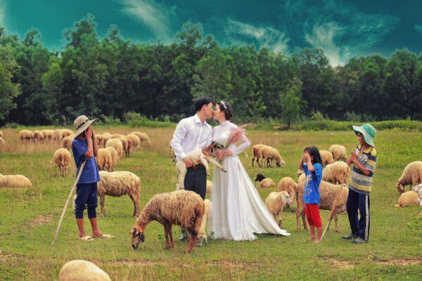 Nhiều cặp đôi chọn Đồi Cừu Suối Nghệ là nơi lưu giữ khoảnh khắc hạnh phúc